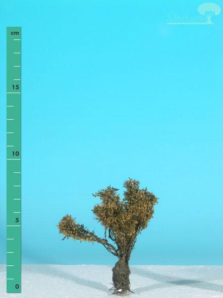 Kopfweide/ Willow stump Spätherbst Größe: 0