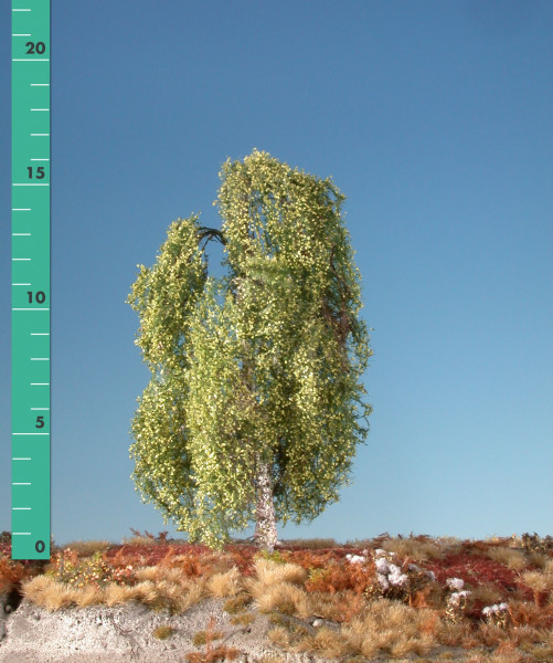Hängebirke/ Weeping birch Frühling Größe: ca. 24 cm